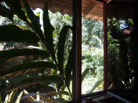 La Casa Fitzcarraldo: green room
