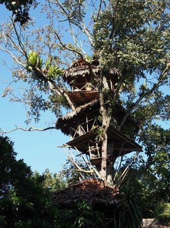 La Casa Fitzcarraldo: treehouse!