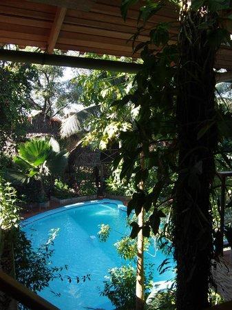 La Casa Fitzcarraldo: pool view