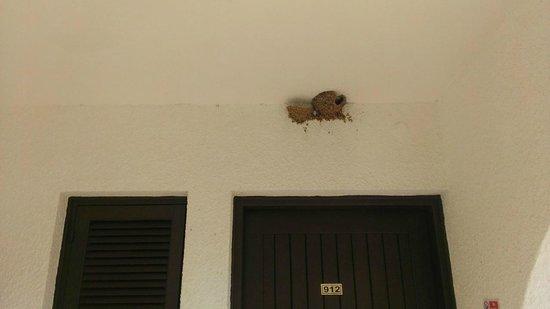 Zening Resorts: Ласточкино гнездо над дверью номера