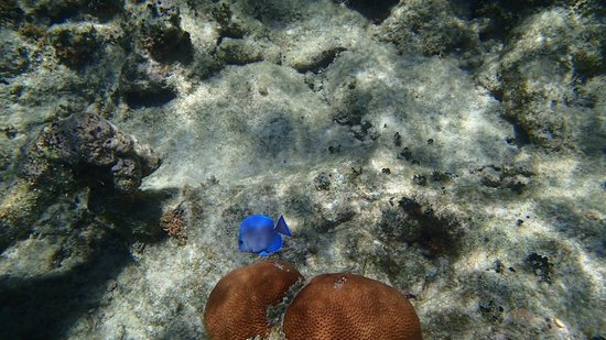 Rosewood Little Dix Bay: Great snorkeling