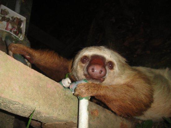 El Perezoso: sloth