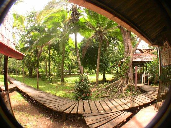 El Perezoso: jungle life
