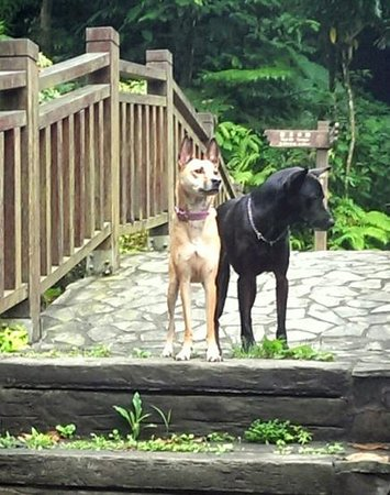 Elephant Mountain (aka Nangang District Hiking Trail): our dogs on the bridge across the river