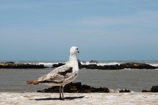 Essaouira Beach: 1