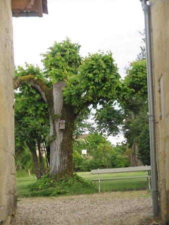 Maison d'Amis at Domaine de Polus: Grounds