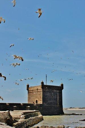E Booking Essaouira тажины - Picture of Medina of Essaouira, Essaouira - TripAdvisor