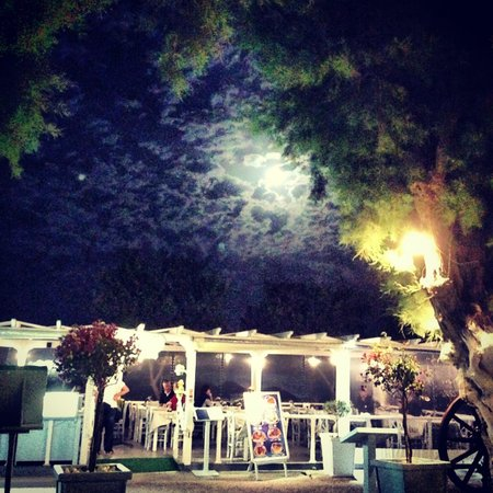 Sea Side Beach Hotel: Hanging out in the moonlight