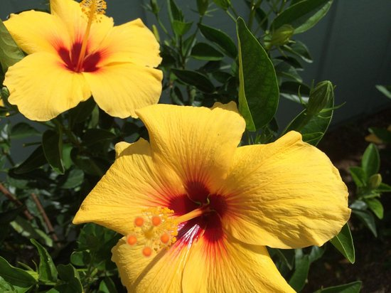 Maui Ocean Breezes: Beautiful flowers all over the property.