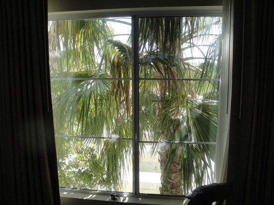 Club de Soleil All-Suite Resort : Window looking down to pool area blocked by palm tree.