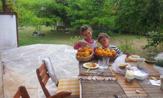 Akdeniz Bahcesi: Детки собрали в саду апельсинов