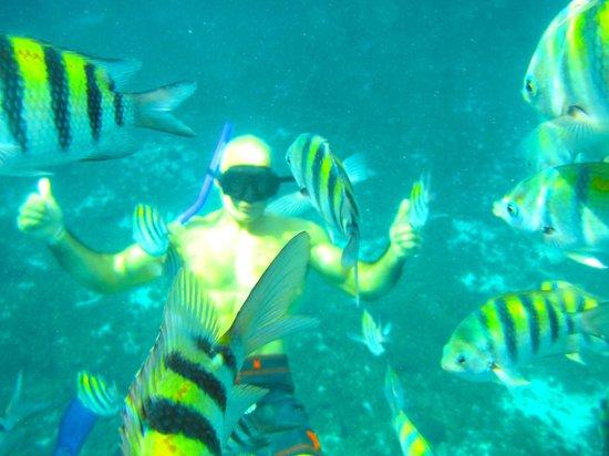 Safe Tours Cozumel: Beautiful fish