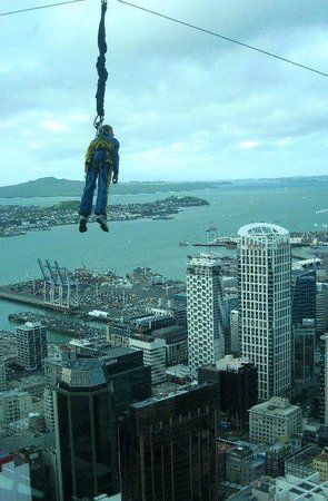 Sky Tower: bungee jumper - could you do this?