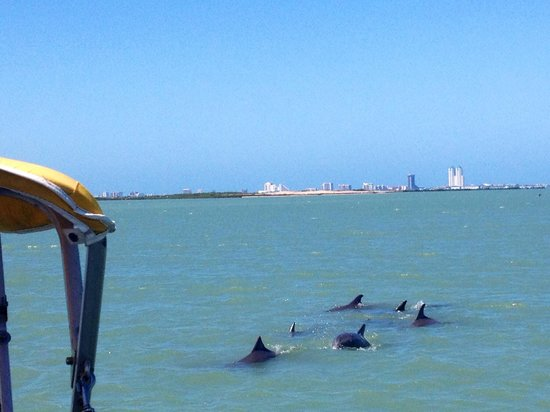 South Padre Island Dolphin Research & Sea Life Nature Center: Fin Love!!