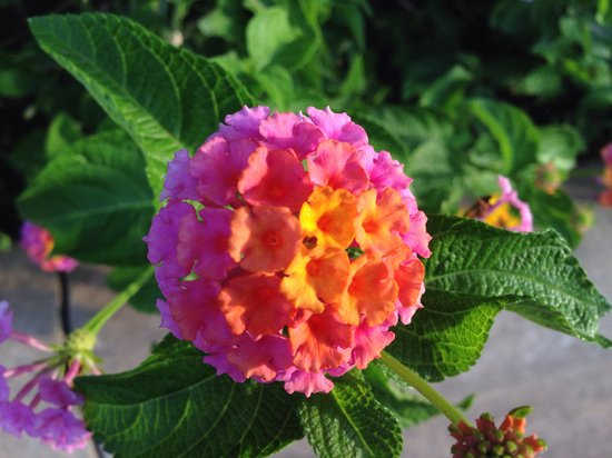 Andaz Costa Rica Resort At Peninsula Papagayo: Loved all the beautiful flowers