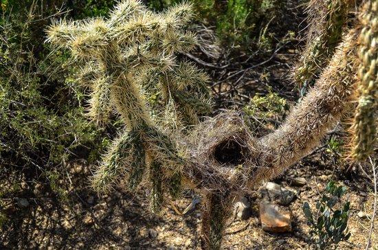 Arizona-Sonora Desert Museum : funny cactus