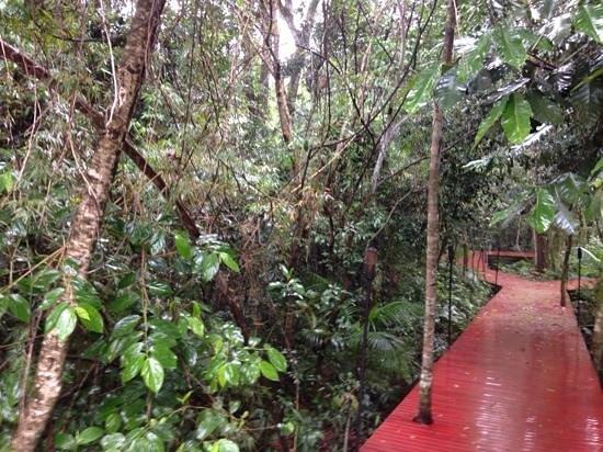 La Cantera Jungle Lodge : Selva misionera