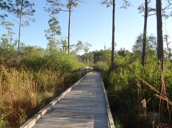 Conservation Park: on the cypress pond trail