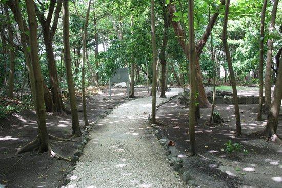 Museo Maya de Cancun: A Mayan treasure