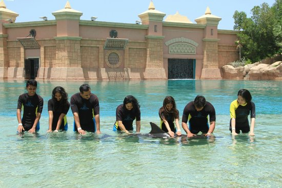 Dolphin Bay: Shallow dolphin encounter at Atlantis Dubai