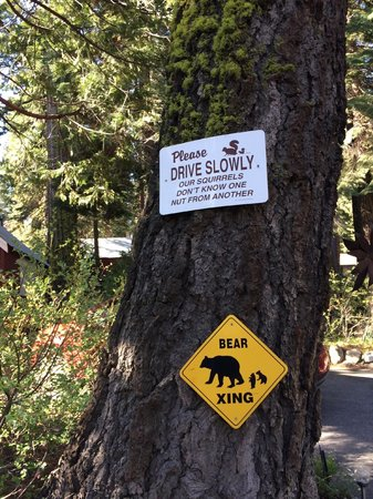 Tahoma Meadows B&B Cottages: Drive slowly!