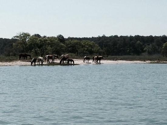 Daisey's Island Cruises : ponies