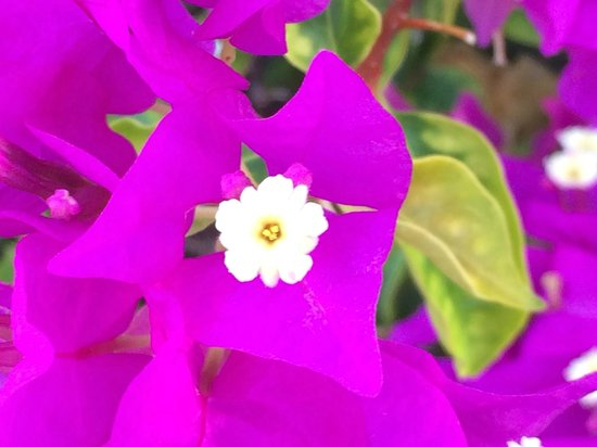 Royal West Indies Resort: Vibrant Flowers