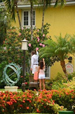 Sandals Royal Bahamian Spa Resort & Offshore Island : room-gardens