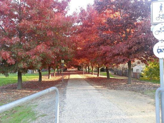 Beechworth Lake Sambell Caravan Park: Walking in Beechworth