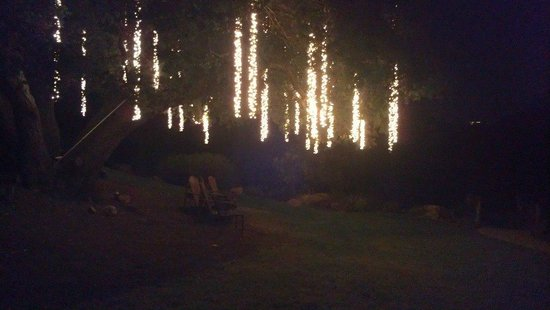 Malibu Wine Safaris: lights in the trees...