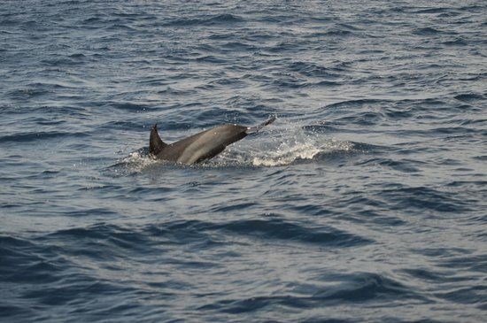 Azores Whale Watching Terra Azul : May 6, 2014