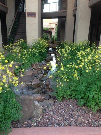 Sedona Real Inn and Suites: Columbine in bloom