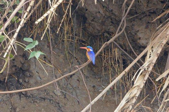 Sanctuary Saadani Safari Lodge: Seen on river safari