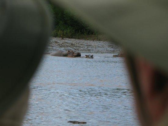 Sanctuary Saadani Safari Lodge: That close to hippos