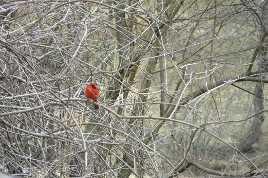 La Bella Terra: Cardinal!