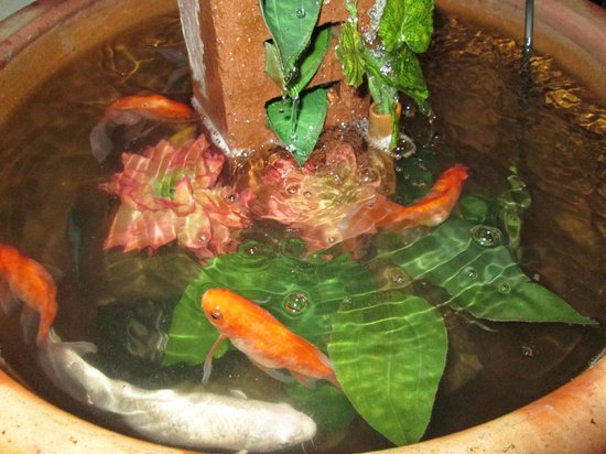Jonkerdee Hostel : The little pond with Koi and Goldfish.