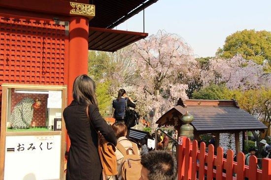 Asakusa Shrine: View from the Shrine