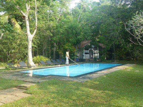 Nisala Arana : Pool