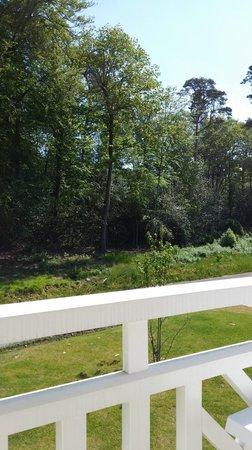 vue de notre terrasse sur la forêt