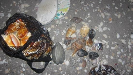 West Wind Inn : shells