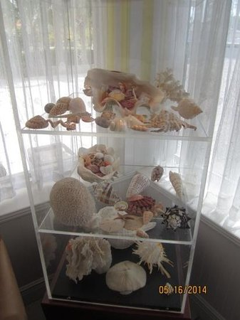 West Wind Inn : shell display in the lobby