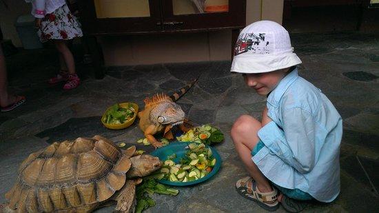 Aquaworld Aquarium & Reptile Rescue Centre : Интересно наблюдать за животными без клетки