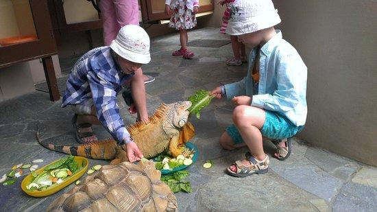 Aquaworld Aquarium & Reptile Rescue Centre: Животных можно покормить