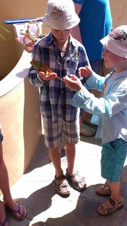 Aquaworld Aquarium & Reptile Rescue Centre : Некоторые ящерицы не хотят с рук уходить