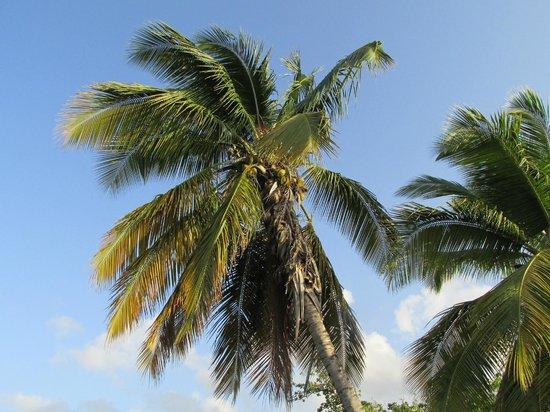 Hôtel Corail Residence: palmier