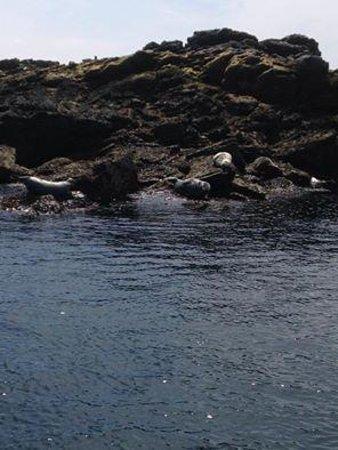 Mermaid Pleasure Trips: The local seals