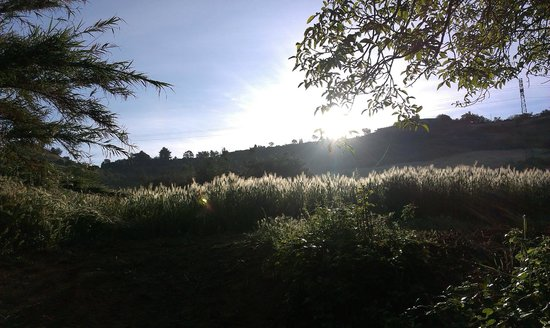 Farm Il Casale delle Rose : Landscape in the morning.