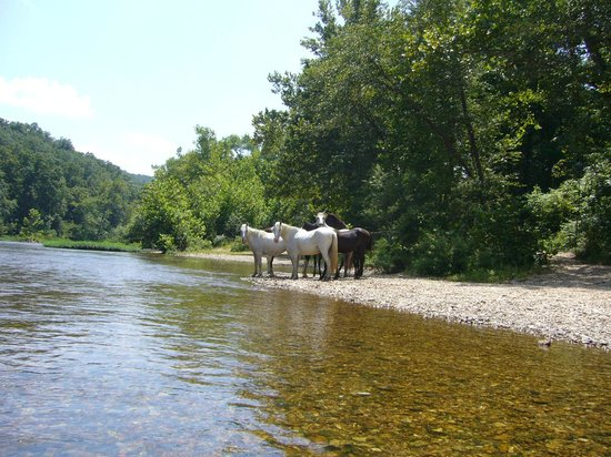 Current River Canoeing Missouri: Eminence wild horse