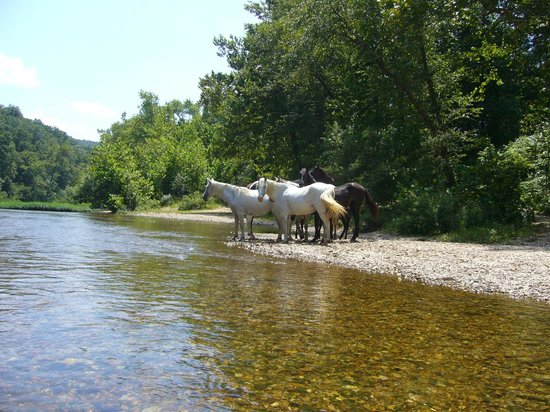 Current River Canoeing Missouri: Eminence wild horses