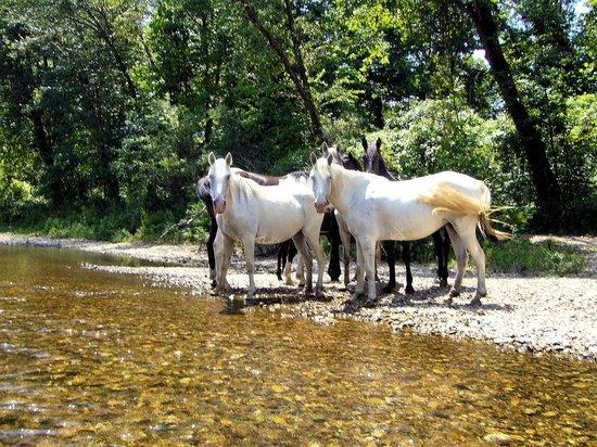 Eminence wild horses